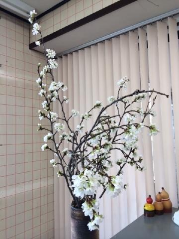 桜 満開!
